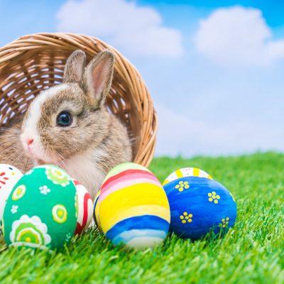 Photos with Bunny