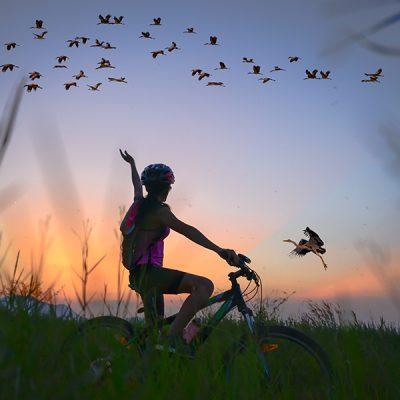 Birding by Bike